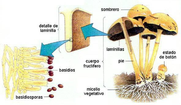 El hongo sobre la uña en las manos del acero en el tratamiento